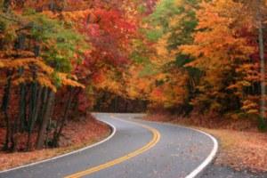 rp_fall-foliage-2-800x6002b25284002bx2b2662529.jpg