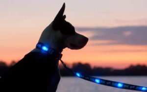 Dog E Glow Light Up Leashes Review – Holiday Gift Guide