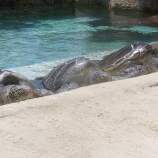 Sea Turtles – Wordless Wednesday