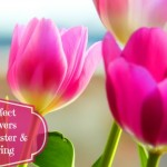 The Perfect Easter Flowers – A Guide