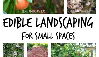 edible-landscaping-for-small-spaces