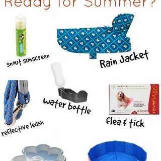 Must Have Summer Survival Items for Dogs