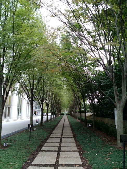 tree lined walk