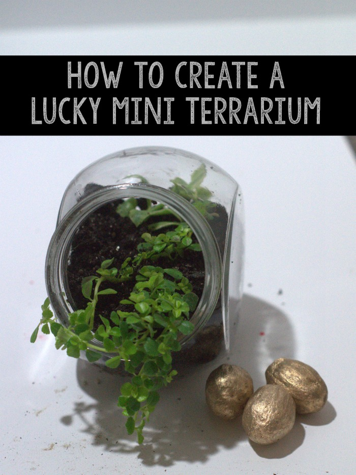 How to Create a lucky Mini Terrarium. This is ideal for your office, a bedroom shelf, or a bookshelf in a cluster.