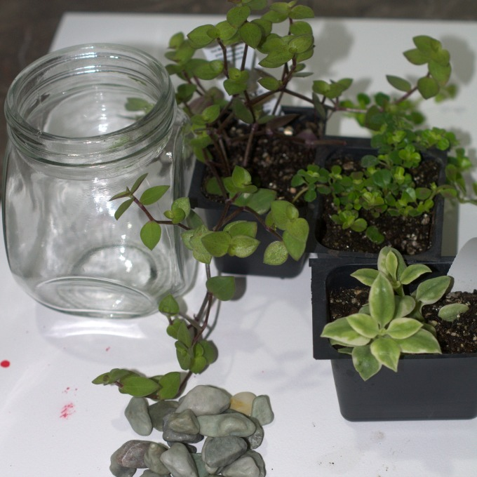 Supplies to make a mini terrarium