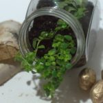 How to Create a Lucky Mini Terrarium that Fits Anywhere