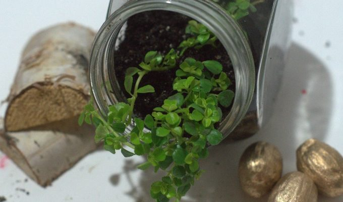 How to Create a Lucky Mini Terrarium that Fits Anywhere