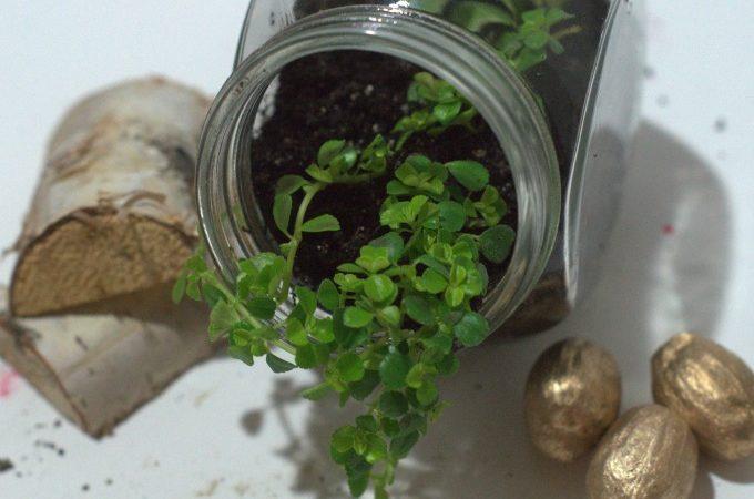 How to make a lucky miini terrarium