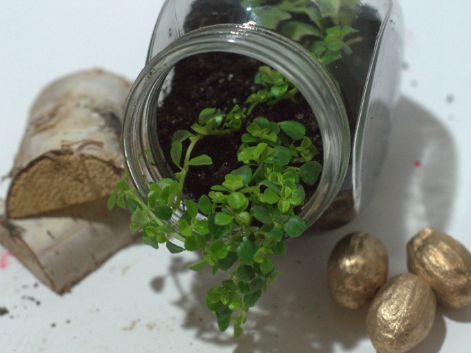 How to make a lucky miini terrarium
