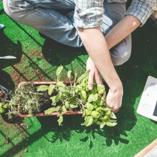 Easy Tips and Tricks to Keep Your Garden Disease Free
