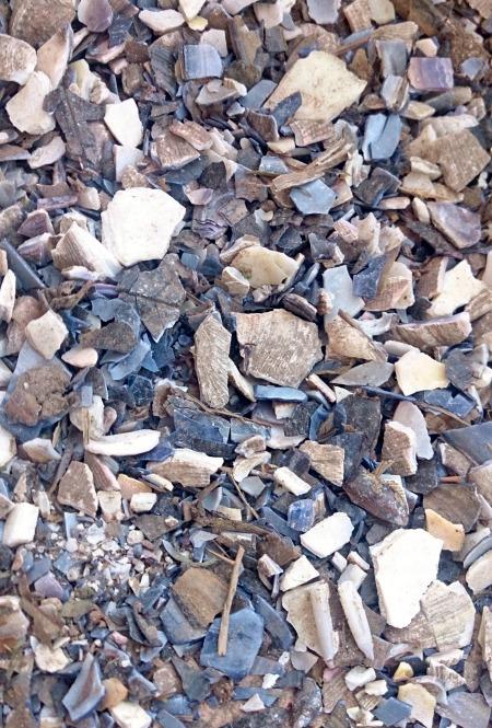 broken-shells