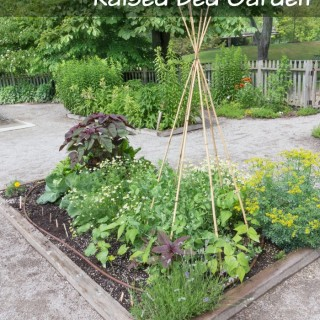 How to Start a Raised Bed Garden for Your Veggies