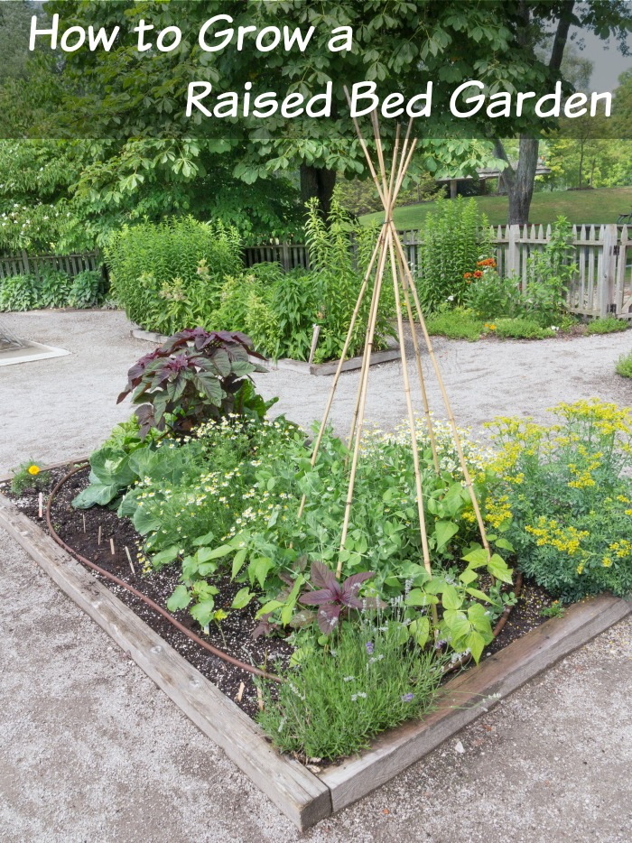 how-to-grow-a-raised-bed-garden