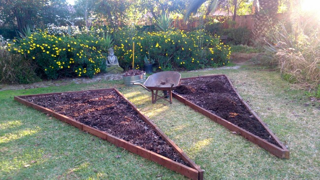 veggie-beds-with-shells-and-fertilizer