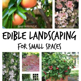 Edible landscape ideas for small spaces. Make that area do double duty