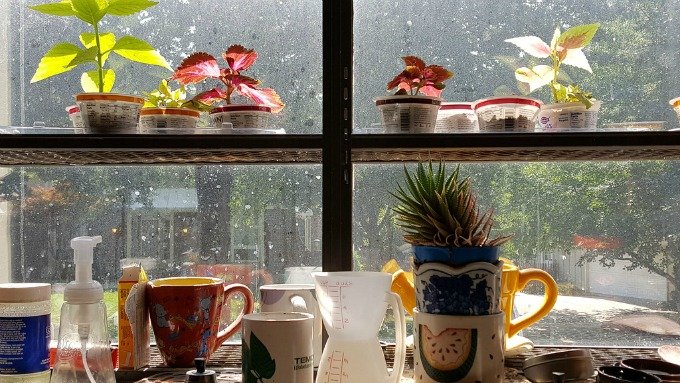 plants in the kitchen window