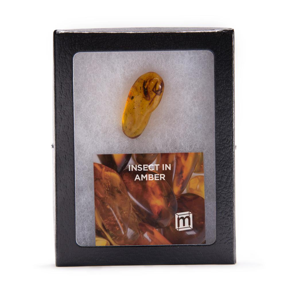 Genuine amber specimen with bug