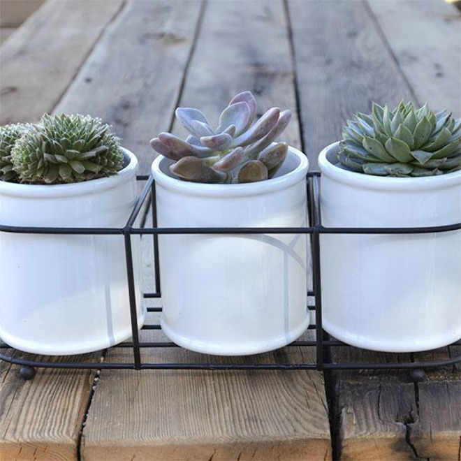 JP Digs and Co Succulent Planter Giveaway
