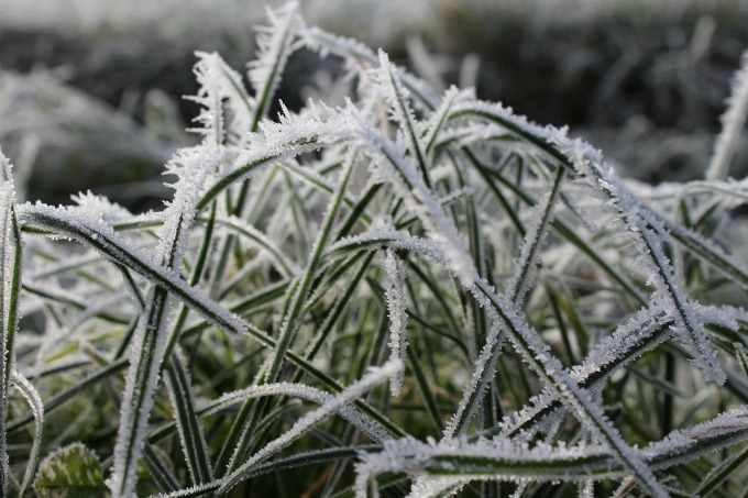 winterize your yard