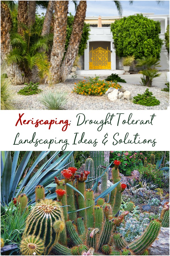 Xeriscaping is the practice of drought tolerant landscaping, and is popular in desert climates. Find out what you need to do ths for your own home. | Xeriscape | landscape | yard | lawn care | Drought resistant | heat tolerant | cactus | desert | arizona | California | Nevada | utah |
