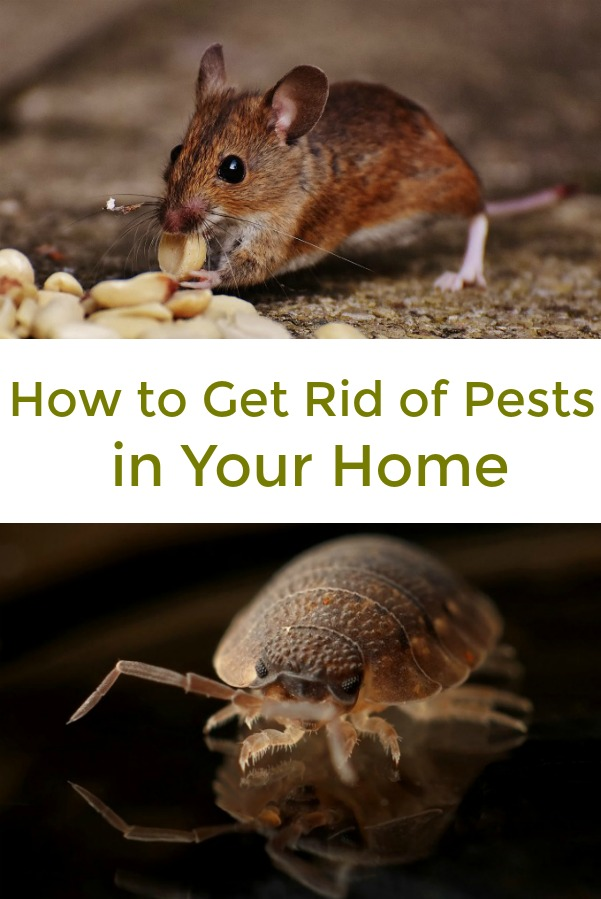 Easy tips and tricks to get rid of pests, and how to know when to call in a professional
