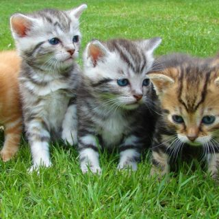 Four kittens in grass